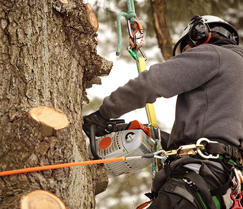 Wyoming Professional Tree Care LLC employee cutting a tree down