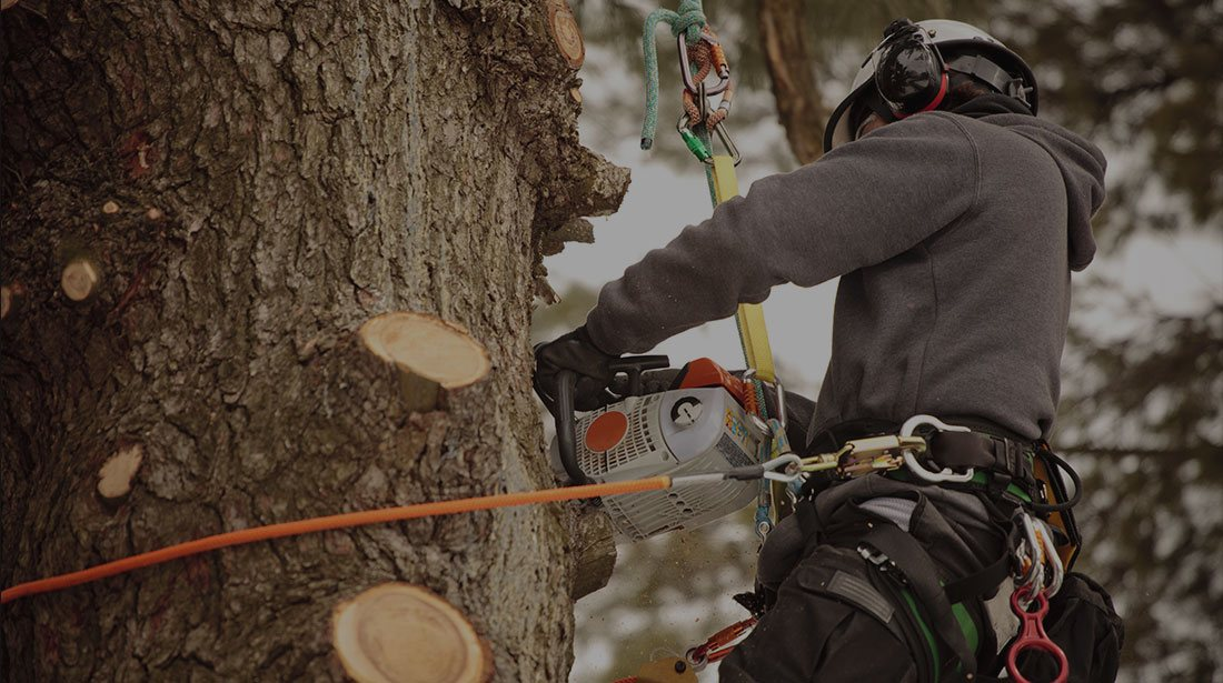 Wyoming Professional Tree Care LLC: Stump and tree removal in Cheyenne, Laramie and Wheatland