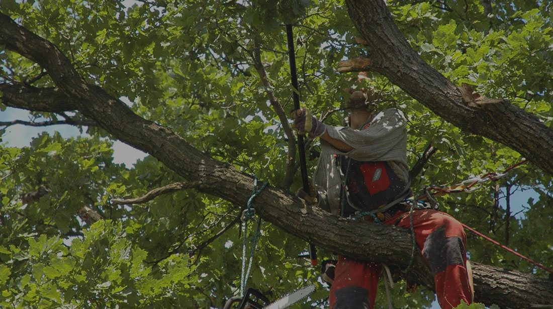 Wyoming Professional Tree Care LLC: Tree cabling and bracing in Cheyenne, Laramie and Wheatland