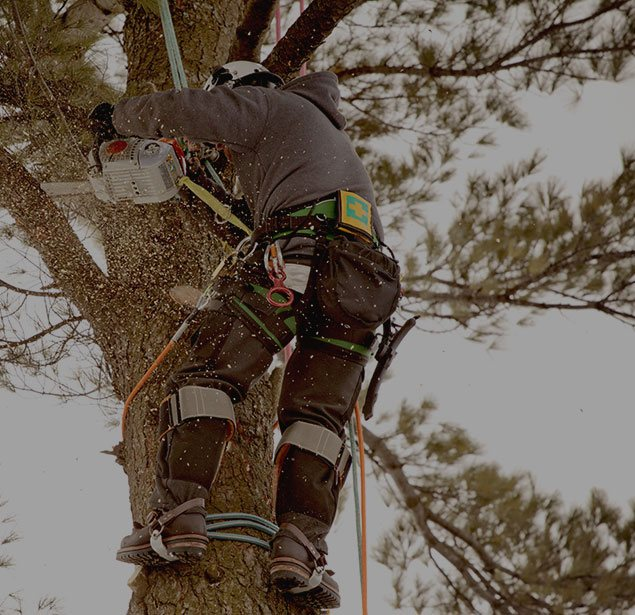 Wyoming Professional Tree Care LLC: Tree health in Cheyenne, Laramie and Wheatland