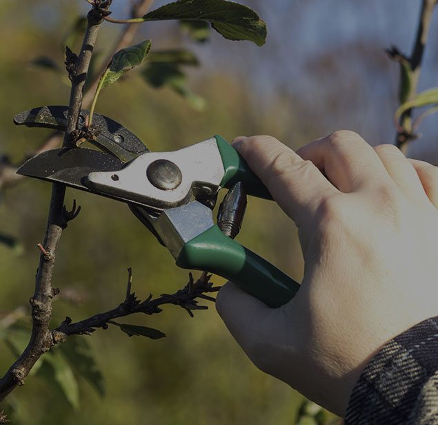 Wyoming Professional Tree Care LLC: Tree pruning in Cheyenne, Laramie and Wheatland